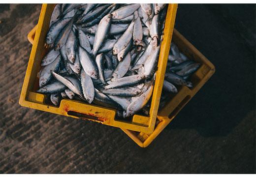 Сырая рыба в ящике