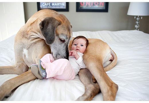 Ребенок и собака на диване