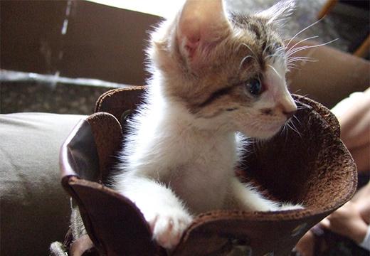 котенок в ботинке