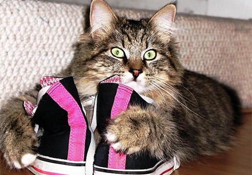Кот и кроссовки