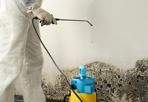 чистка плесени на стенах