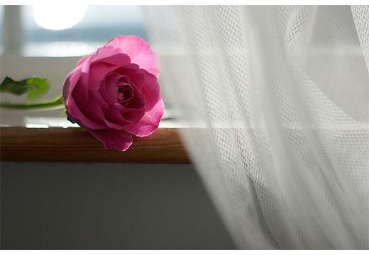 Белоснежная тюль и роза