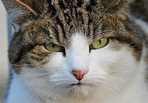 Кот нашкодничал