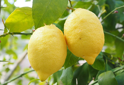 Лимоны от запаха